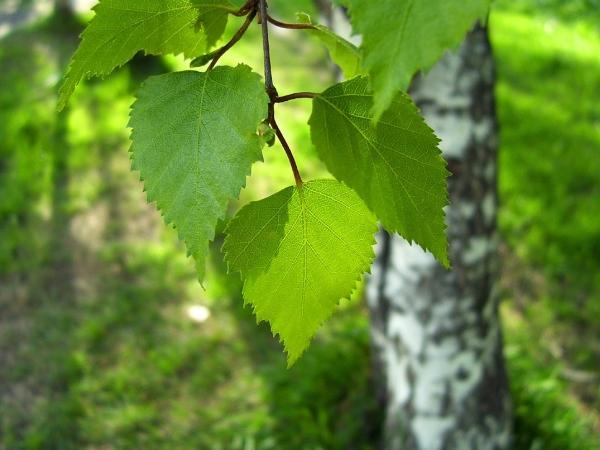 обычаи славян, зелёные русалии