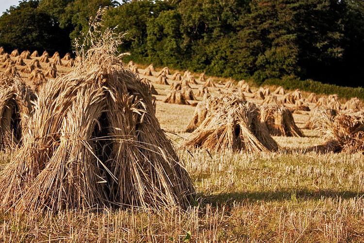 славянские праздники в июле, день снопа велеса