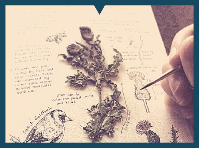 травы в магии, применение трав в магии